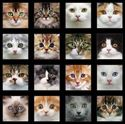 Bild på Multi Adorable Pets Panel Cats