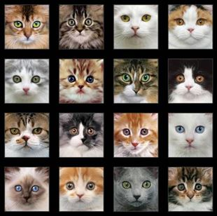 Bild av Multi Adorable Pets Panel Cats