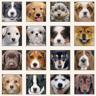 Bild av Cream adorable pets panel dogs