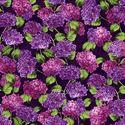Bild på Hydrangea Harmony by Cedar West
