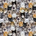 Bild på Mutli Packed Mixed Breeds Of Cats C8417-MULT