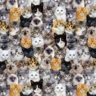 Bild av Mutli Packed Mixed Breeds Of Cats C8417-MULT